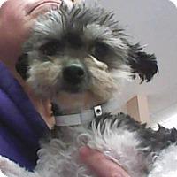Adopt A Pet :: Tashi - Newport, KY