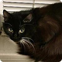 Adopt A Pet :: Irene - Ocala, FL