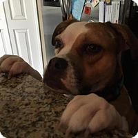 Adopt A Pet :: Oakley - Elkton, FL