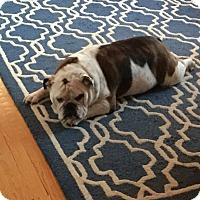 Adopt A Pet :: Lulu - Falls Church, VA