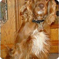 Adopt A Pet :: Donovan - Sugarland, TX