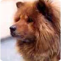 Adopt A Pet :: Mafusa--Courtesy - Columbus, OH