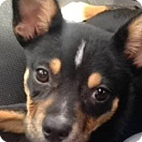 Adopt A Pet :: lil gal - Alliance, NE