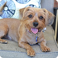 Adopt A Pet :: Sprout - Los Angeles, CA