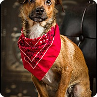 Adopt A Pet :: Harry - Owensboro, KY
