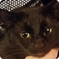 Adopt A Pet :: Baby - Vancouver, BC
