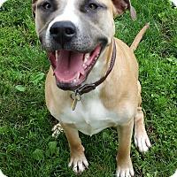 Adopt A Pet :: Mariah Pending Adoption - Lima, OH
