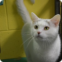 Adopt A Pet :: Scarlett - Pottsville, PA