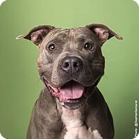 Adopt A Pet :: Grizzle - Austin, TX