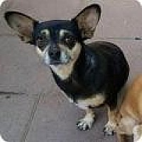Adopt A Pet :: Reyna - Creston, CA
