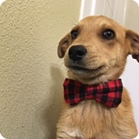 Adopt A Pet :: Elwood - Glendale, AZ