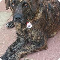 Adopt A Pet :: Dixie - Holly Springs, NC