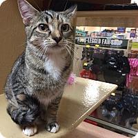 Adopt A Pet :: Wynonna - Morganton, NC