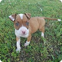 Adopt A Pet :: Butterfinger - Knoxville, TN