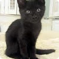 Adopt A Pet :: Puck - Arlington, VA