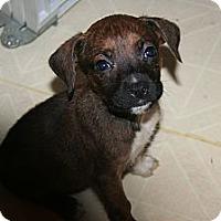 Adopt A Pet :: Herbie - Westfield, IN