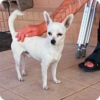 Adopt A Pet :: Johnny - Alamogordo, NM