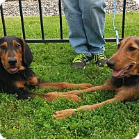 Adopt A Pet :: Jasmine Rose & Maple Leaf - Hagerstown, MD