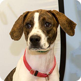 Hound (Unknown Type) Mix Dog for adoption in Martinsville, Indiana - Flowers