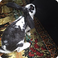 Adopt A Pet :: Snookie - Williston, FL