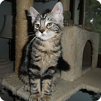 Adopt A Pet :: Dewgong - Milwaukee, WI