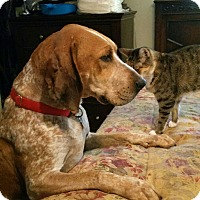 Coonhound Mix Dog for adoption in Demorest, Georgia - Francis