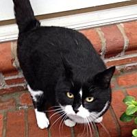 Adopt A Pet :: Oreo - Mount Airy, NC