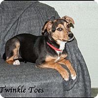 Adopt A Pet :: Tinkle Toes - Ada, OK