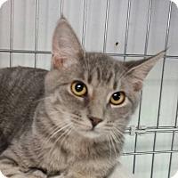 Adopt A Pet :: Tuna - Jeannette, PA