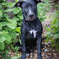 Adopt A Pet :: Baxter - Austin, TX