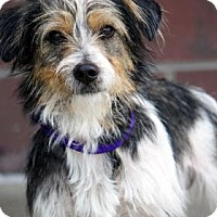 Adopt A Pet :: Fluffer Nutter - Newport, KY