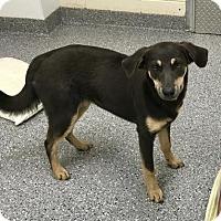 Adopt A Pet :: Spot - Hendersonville, NC