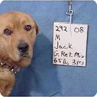 Adopt A Pet :: Jack/Adopted! - Zanesville, OH