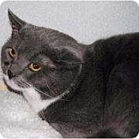 Adopt A Pet :: Misfit - Marietta, GA