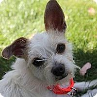 Adopt A Pet :: Serenity - Mission Viejo, CA