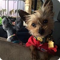 Adopt A Pet :: Mushu - Gulfport, FL