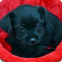 Adopt A Pet :: Christine-Adoption pending - Bridgeton, MO