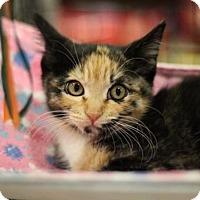 Adopt A Pet :: Suzy - Sacramento, CA