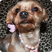 Adopt A Pet :: Minnie - Statewide and National, TX