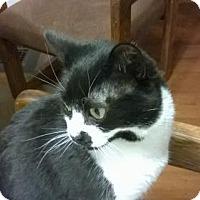Adopt A Pet :: Zuma - Wakefield, MA