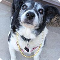 Adopt A Pet :: Lady - Yukon, OK