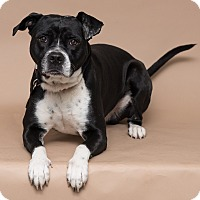 Adopt A Pet :: Ace - Westfield, NY
