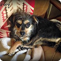 Adopt A Pet :: Chewy - Tijeras, NM