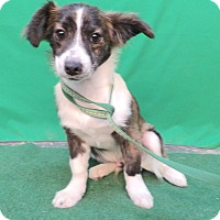 Adopt A Pet :: Hanna - San Diego, CA