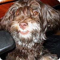 Adopt A Pet :: FRANZ - Hollywood, FL