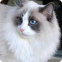 Adopt A Pet :: Louise - Palmdale, CA