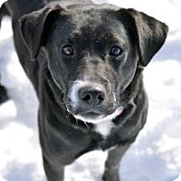 Adopt A Pet :: Dove - Cheyenne, WY
