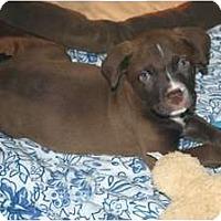 Adopt A Pet :: Jude - Minneola, FL