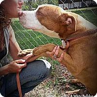 Adopt A Pet :: Rebel - Eustis, FL