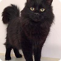 Adopt A Pet :: Mary Louise - Merrifield, VA